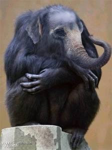 ElephantApe01